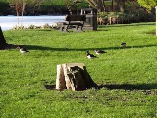 loch-soy--birds-paulina