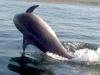 dolphin-ian-bright